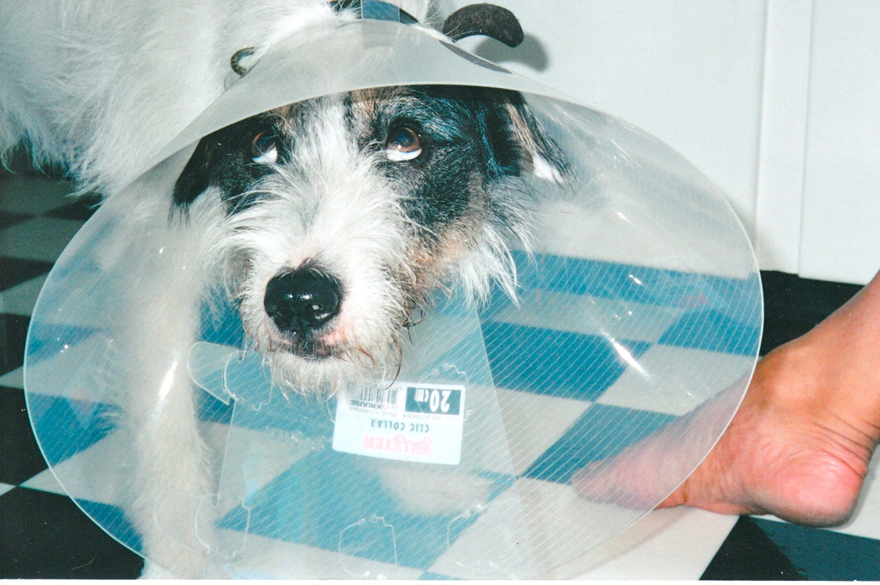 """Andy hated having to wear the dreaded """"cone."""""""